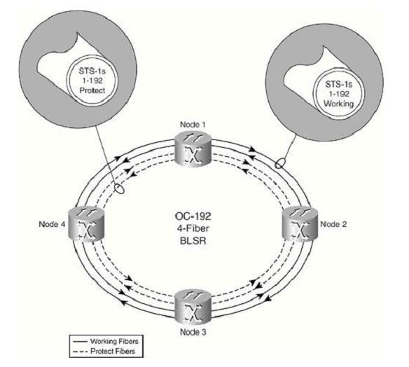 Topologia MS-SPRING de 4 fibras 05